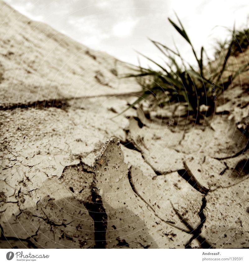 38° Sommer Wärme Sand Erde Bodenbelag Physik heiß trocken Riss Grundbesitz gießen Dürre getrocknet Erosion geplatzt Bewässerung
