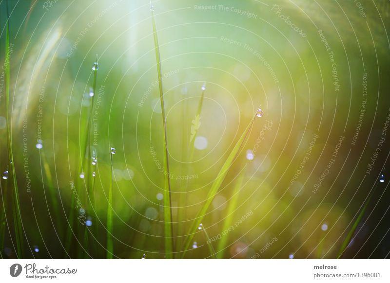 Morgentau Stil Design Natur Wassertropfen Herbst Schönes Wetter Gras Grashalme Wiese Tau Tautropfen Bokeh Lichterkette glänzend leuchten träumen schön nah Stadt