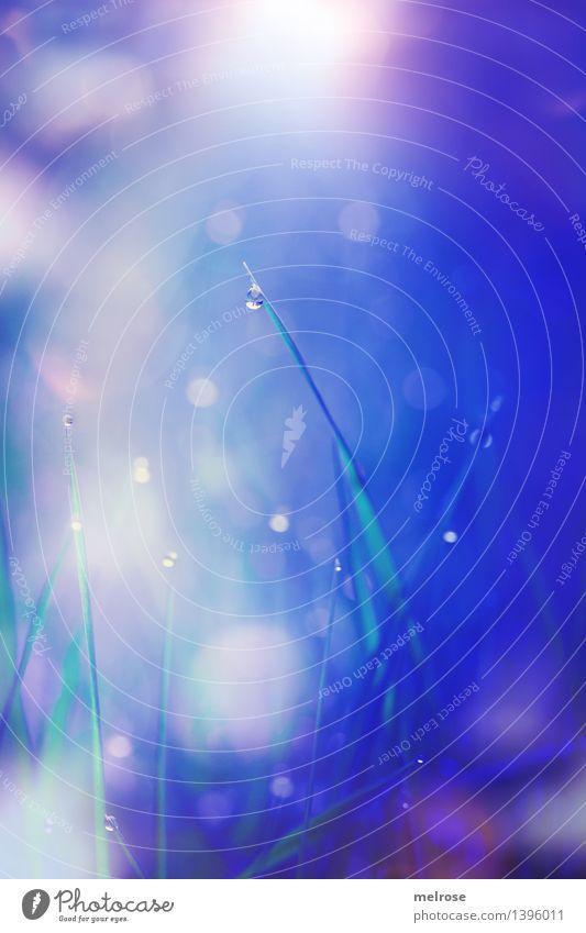 Glitzerglämmer elegant Stil Natur Wassertropfen Sonne Herbst Schönes Wetter Gras Halm Pflanze Wiese Dekoration & Verzierung Tau Bokeh Lichterkette Tropfen
