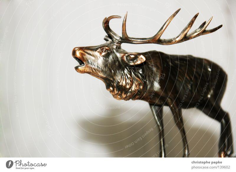 Oh My Deer Farbfoto Gedeckte Farben Innenaufnahme Detailaufnahme Textfreiraum unten Reflexion & Spiegelung Zentralperspektive Tierporträt
