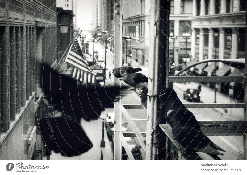 Taube auf Halbmast Stadt Straße Graffiti grau Gebäude PKW Vogel dreckig fliegen Hochhaus Streifen USA Fahne U-Bahn Geländer Dienstleistungsgewerbe
