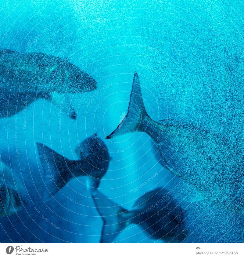 Gruppenreise Wasser Küste Meer Fluss Tier Wildtier Fisch Schwarm füttern Jagd Ferien & Urlaub & Reisen Schwimmen & Baden Flüssigkeit frisch Gesundheit nass wild