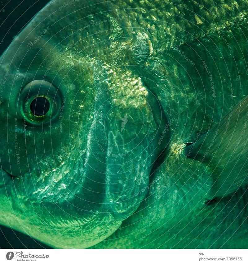 Mir geht´s glänzend. Fisch Abendessen Wasser Küste Flussufer Nordsee Ostsee Meer Wildtier Tiergesicht Essen Fressen füttern Schwimmen & Baden ästhetisch frisch