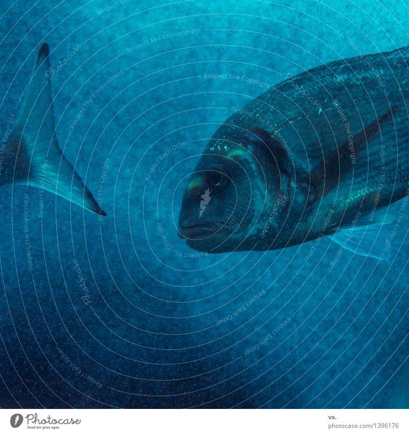 Mitschwimmer blau Wasser Meer Tier Essen Küste Gesundheit Schwimmen & Baden frisch Wellen Wildtier nass Fisch Fluss Seeufer Bucht