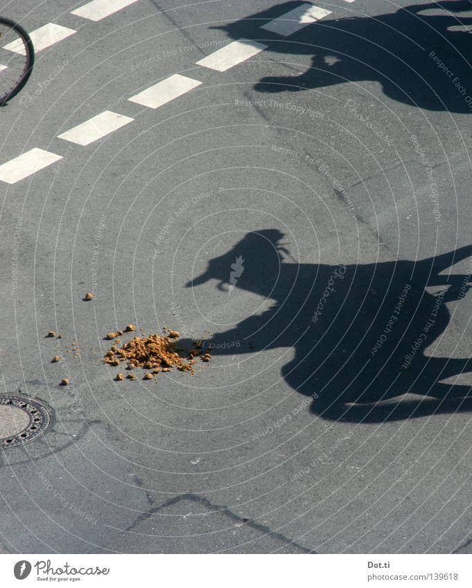 lachende Kamera – organic Bollenhut Tier Straße grau Linie lustig dreckig Schilder & Markierungen verrückt Pferd Streifen Asphalt Kot diagonal skurril Verkehrswege