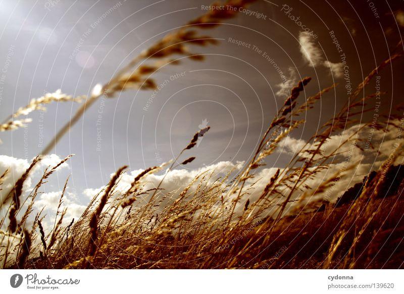 Sommer atmen Natur schön Himmel grün Sommer Wolken Leben Wiese Gefühle Gras Bewegung Wärme Landschaft Luft Feld Wind