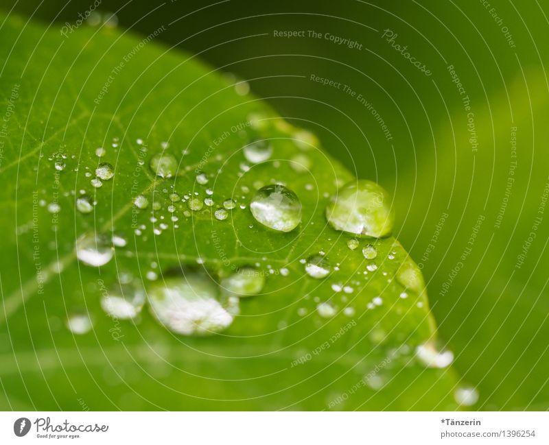 Wasservorrat Natur Pflanze Wassertropfen Herbst schlechtes Wetter Regen Blume Blatt frisch nass natürlich schön grün Farbfoto Gedeckte Farben Außenaufnahme