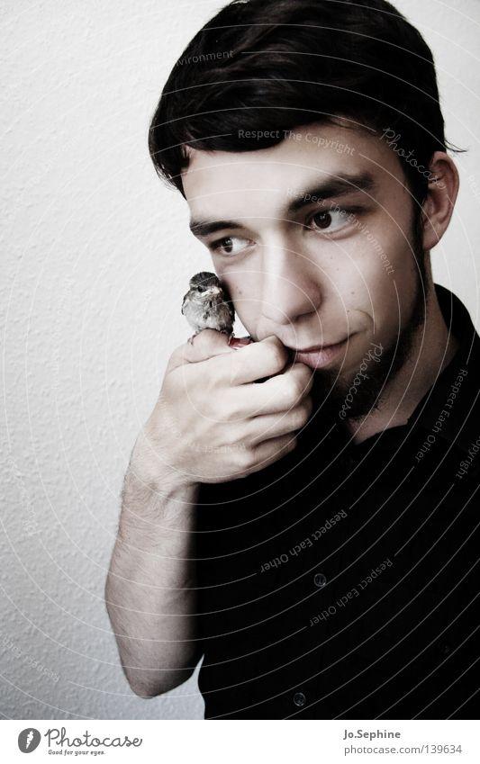he adores birds. Mann weiß Hand schwarz Erwachsene Junger Mann Tierjunges 18-30 Jahre Vogel niedlich weich festhalten Bart Hemd Vertrauen brünett
