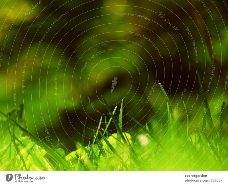 lieblingsfoto Sommer Frühling dunkel mehrfarbig Gras Sträucher Luke Ferne Idylle heiß Freizeit & Hobby Sonntag Samstag Wochenende Park Wachstum fremd Fremder
