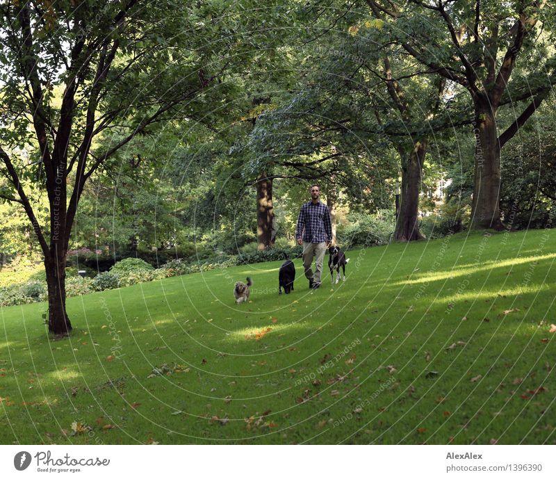 Gassigehen³ Hund Jugendliche Pflanze Baum Junger Mann Landschaft Tier Gras natürlich Spielen Zusammensein Park wandern authentisch Erfolg