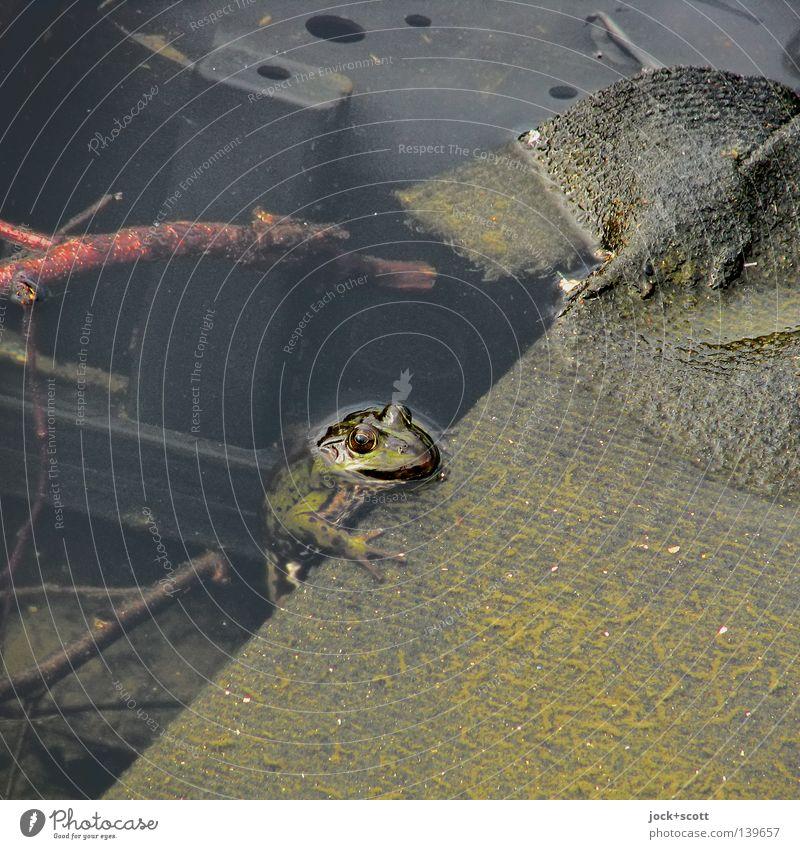 Quaken im Müll alt grün Wasser Sommer Umwelt dreckig Schutz Neugier festhalten Teile u. Stücke Zukunftsangst Müll Verfall Umweltschutz schäbig machen