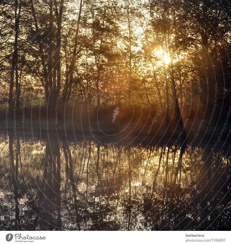 So fängt der Tag gut an Natur Landschaft Wasser Sonnenlicht Herbst Schönes Wetter Nebel Baum Sträucher Teich See leuchten Stimmung Warmherzigkeit Beginn Gefühle