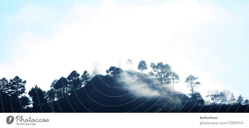 schattenspiel Ferien & Urlaub & Reisen Tourismus Ausflug Abenteuer Ferne Freiheit Natur Landschaft Himmel Wolken Nebel Baum Wald Hügel Berge u. Gebirge