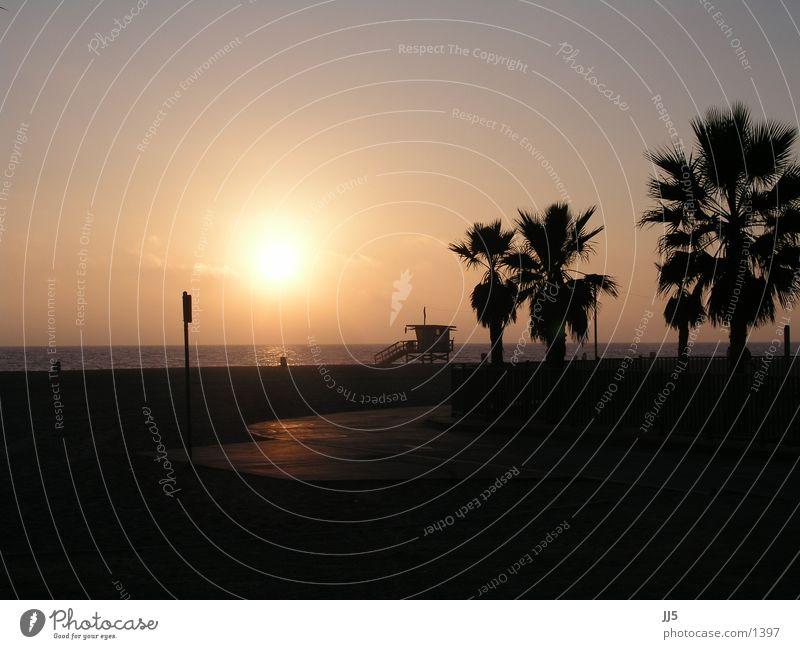 venice beach Strand Kalifornien Sonnenuntergang Palme Wasser Abendsonne Sonnenlicht Silhouette Pazifik Pazifikstrand Palmenstrand Strandposten Textfreiraum oben