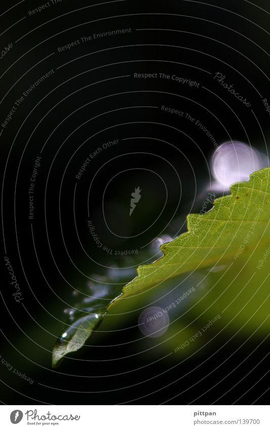 watery II nass Blatt Makroaufnahme Nahaufnahme Wasser Wassertropfen Regen - .
