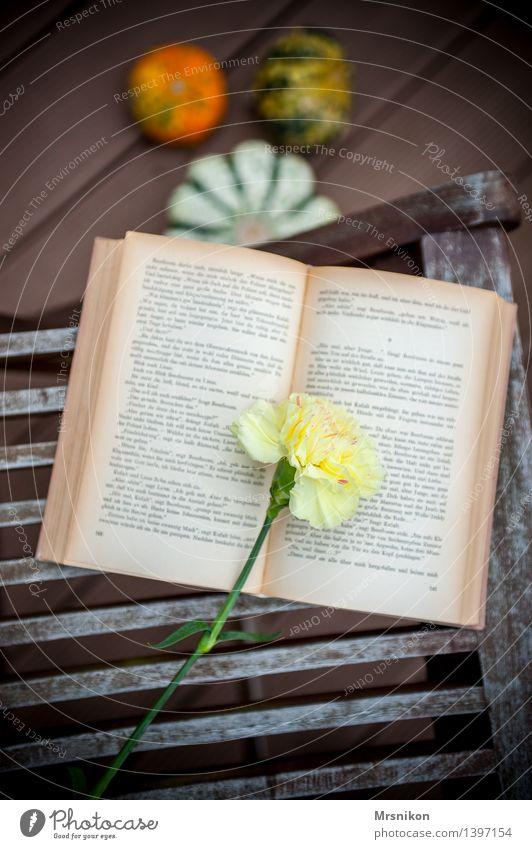 Nelke Medien Printmedien Buch lesen schön Buchseite Nelkengewächse Lesestoff Leseratte Blume Kürbis Kürbiszeit herbstlich Herbst Erholung erholsam Farbfoto