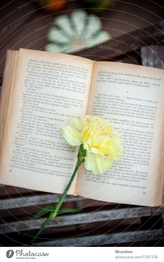 Nelke Erholung ruhig gelb Glück Zeit Zufriedenheit Freizeit & Hobby lernen Buch lesen Bildung Wissen Gedanke Buchseite Printmedien Lesestoff