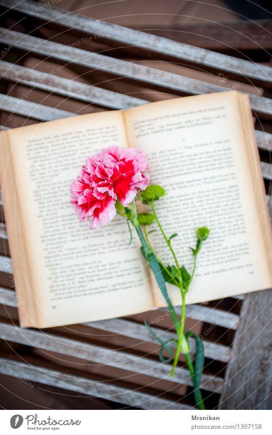 Bücher Erholung Blume Herbst Denken Freizeit & Hobby genießen lernen Buch einzigartig lesen Medien Buchseite Printmedien Schriftsteller Nelkengewächse