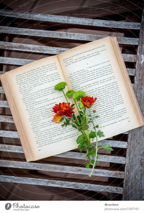Bücherliebe Medien Printmedien Buch lesen lernen Buchseite klassisch Freizeit & Hobby Astern Blume Blumenstrauß Leseratte herbstlich Herbst Terrasse Farbfoto