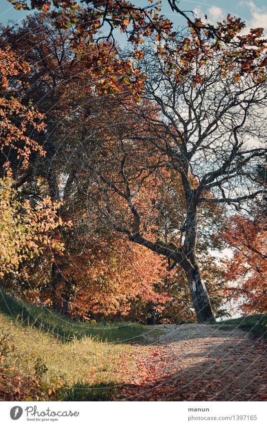 s'herbschdlt Natur Landschaft Herbst Schönes Wetter Baum herbstlich Herbstlaub Herbstbeginn Herbstfärbung Herbstwald natürlich blau braun mehrfarbig gelb gold