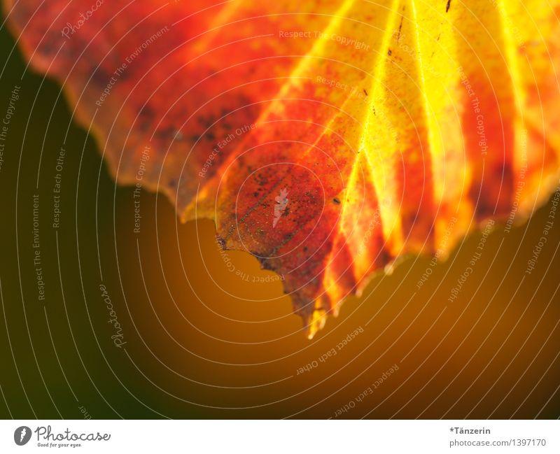 Herbstfarben Umwelt Natur Pflanze Schönes Wetter Baum Blatt Garten Park Wald ästhetisch Freundlichkeit schön braun gelb orange ruhig Farbfoto mehrfarbig
