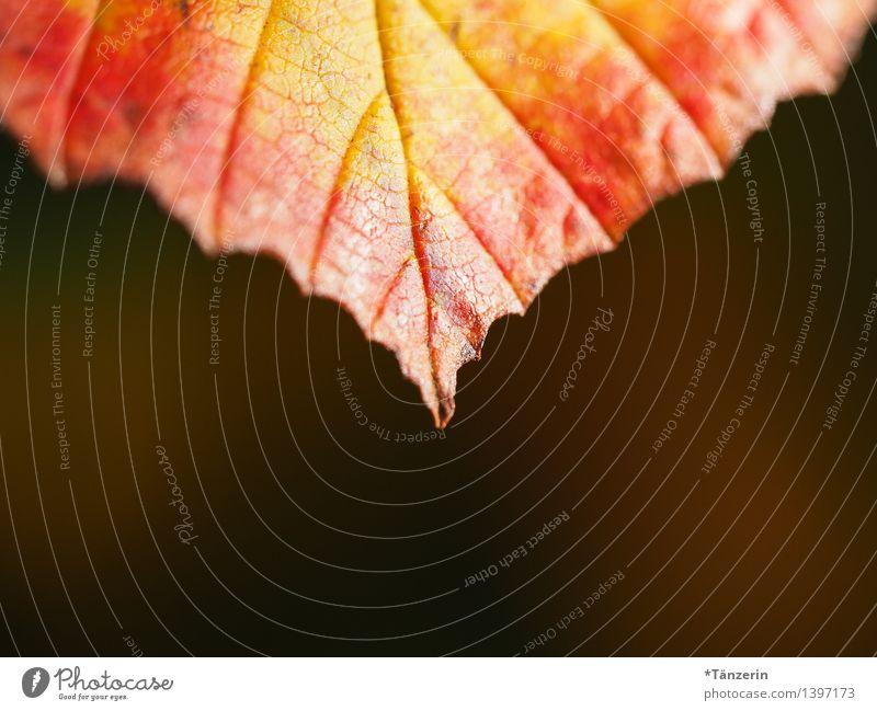Herbstfarben II Natur Pflanze schön Baum Blatt Wald gelb natürlich Garten Park orange ästhetisch Fröhlichkeit Schönes Wetter