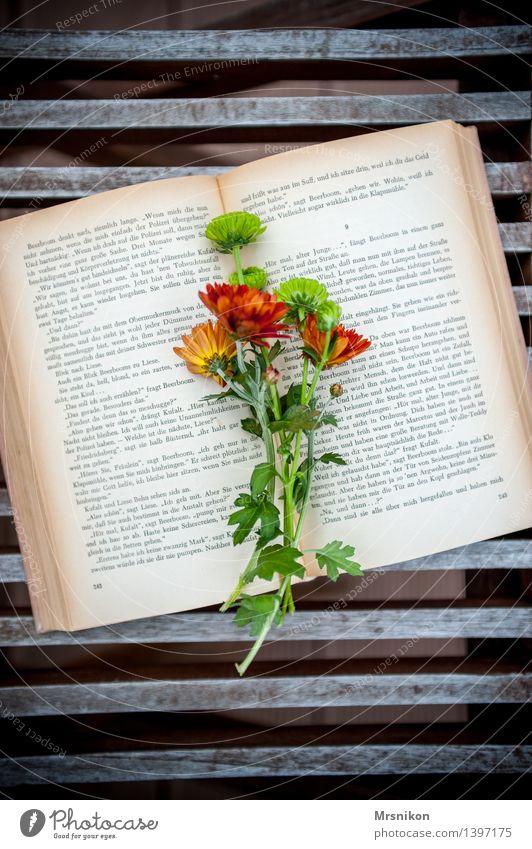 Lesestoff Erholung Blume Herbst Denken Freizeit & Hobby lernen Buch lesen Blumenstrauß herbstlich Buchseite Printmedien verschönern Astern