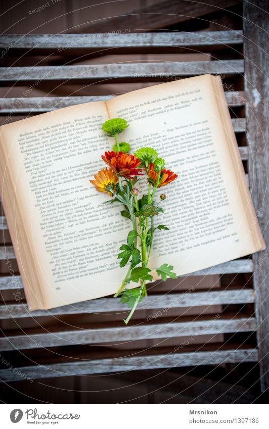 Astern Medien Printmedien Buch lesen lernen Buchseite Lesestoff klassisch Freizeit & Hobby Blume Blumenstrauß Pause Denken verschönern Blatt aufgeschlagen