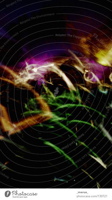 Tanzwiese Mensch Farbe Kunst Linie Musik Tanzen Kultur Stern (Symbol) durcheinander Menschenmenge Scheinwerfer Musikfestival Fusion Lichttechnik Verbindung