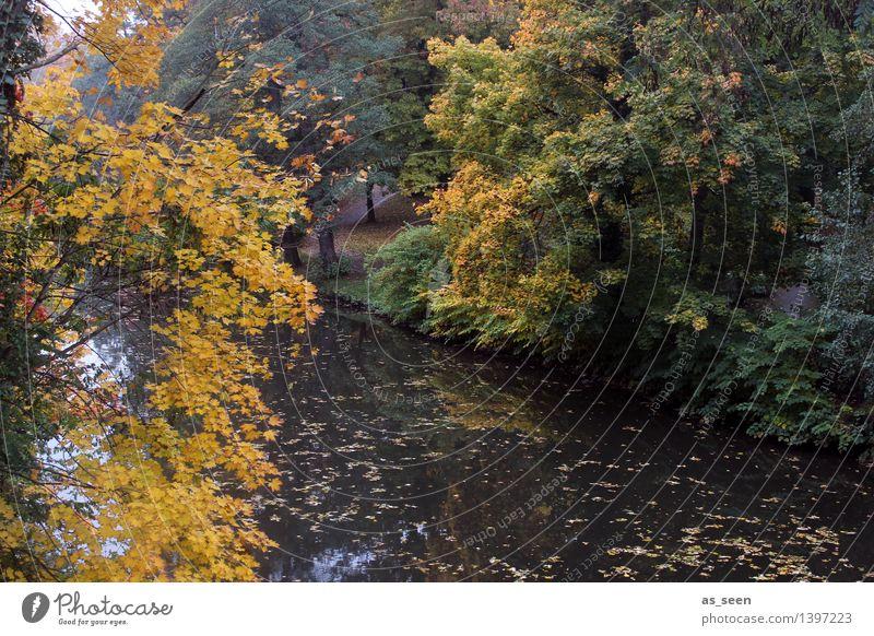 Goldener Oktober Natur alt Pflanze grün Wasser Baum Erholung Landschaft ruhig Umwelt gelb Herbst Senior See Park Wetter