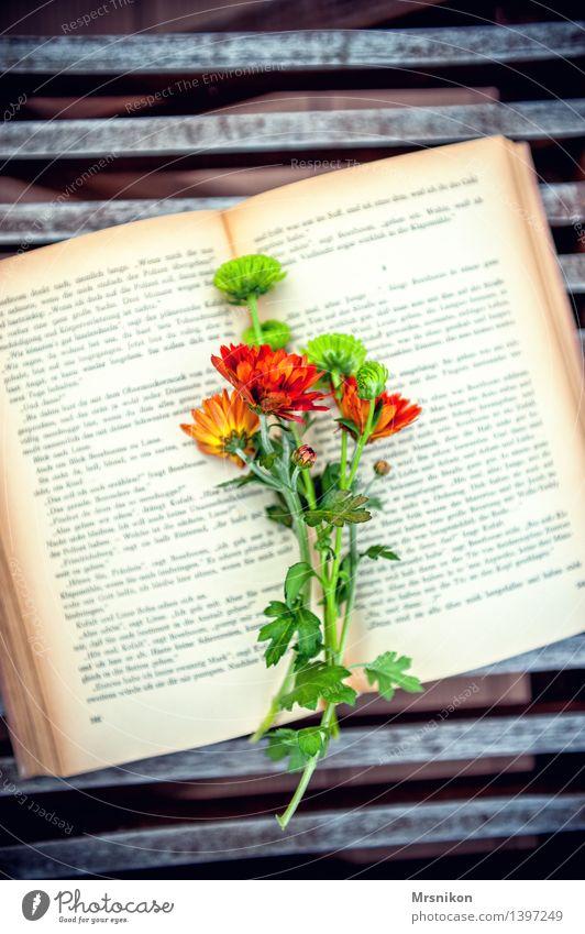 Bücherliebe grün Erholung Blume Herbst Stimmung Freizeit & Hobby fantastisch Buch lesen Blumenstrauß Medien herbstlich Buchseite Printmedien Astern