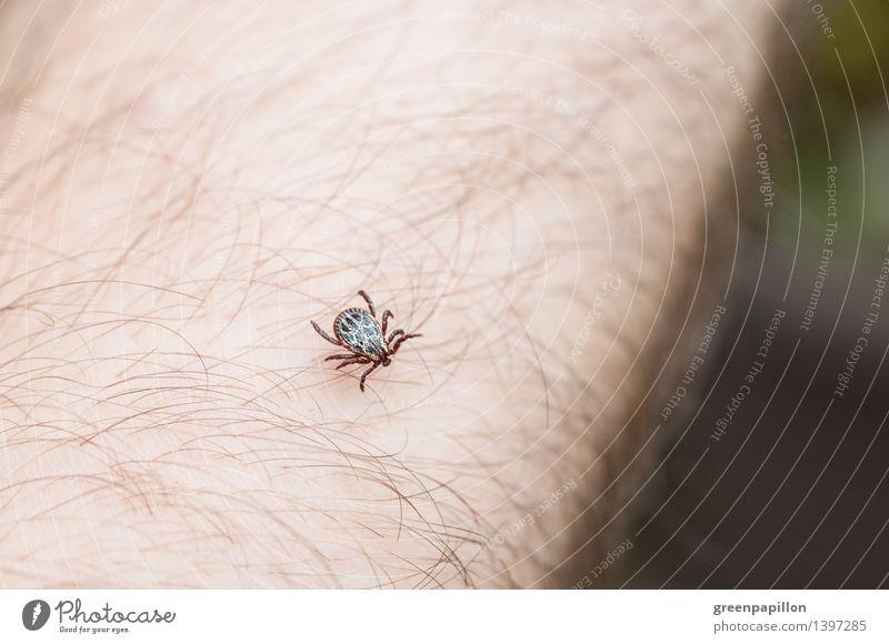 Zecke läuft über menschliche Haut Gesundheit Haare & Frisuren Behaarung Tier Holzbock krabbeln Ekel Frühsommermeningitis FSME Borreliose Hirnhautentzünd Parasit