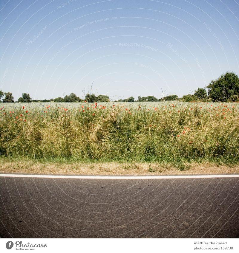 AUS DEM AUTO Landstraße Straßenrand Feld Feldrand Mohn Blauer Himmel Klarer Himmel Wolkenloser Himmel Schönes Wetter Menschenleer Sommer Reifezeit
