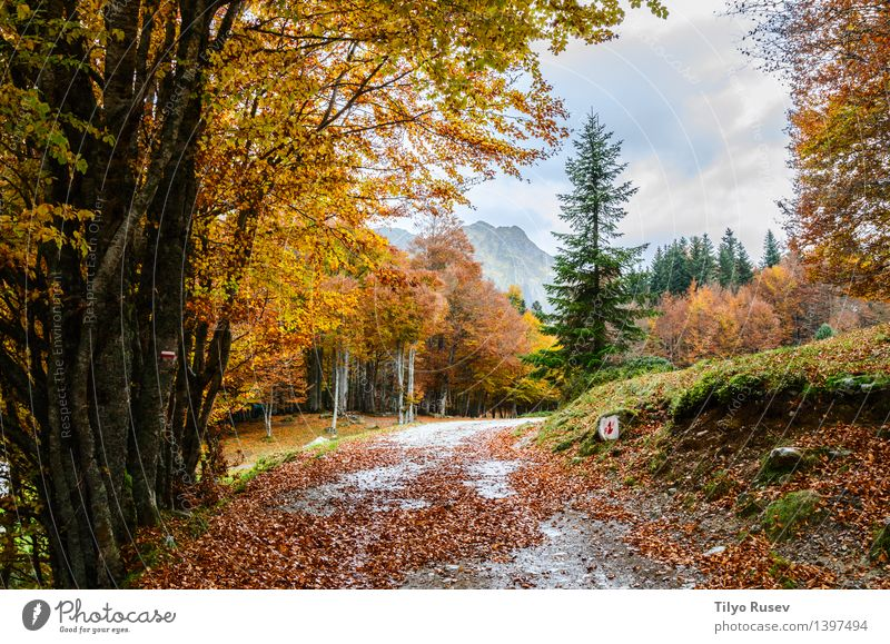Pyrenees Atlantiques schön Sonne Umwelt Natur Landschaft Pflanze Herbst Baum Blatt Park Wald See Fluss Straße Wege & Pfade hell natürlich gelb grün rot Farbe