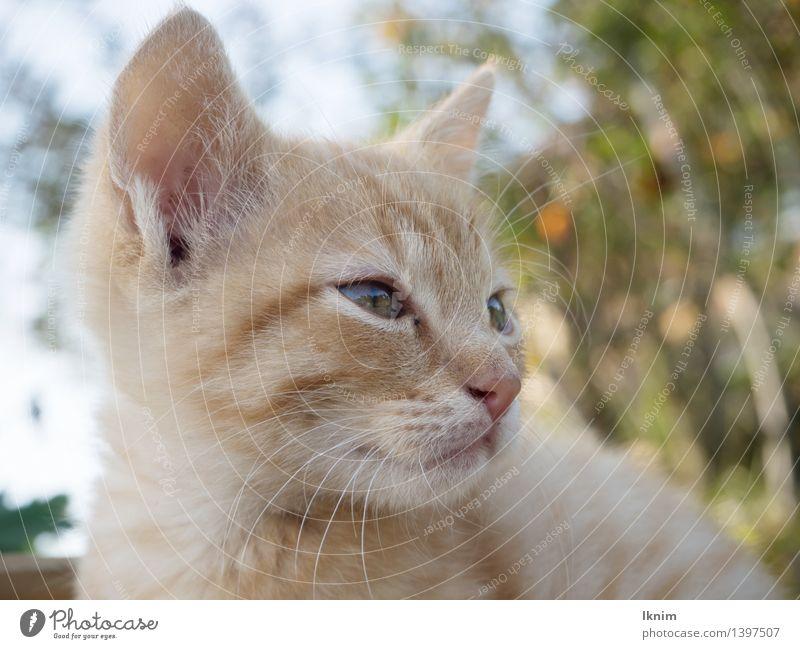 Katzenträume Natur schön Einsamkeit ruhig Tier Ferne Umwelt gelb Denken Garten hell orange träumen warten beobachten