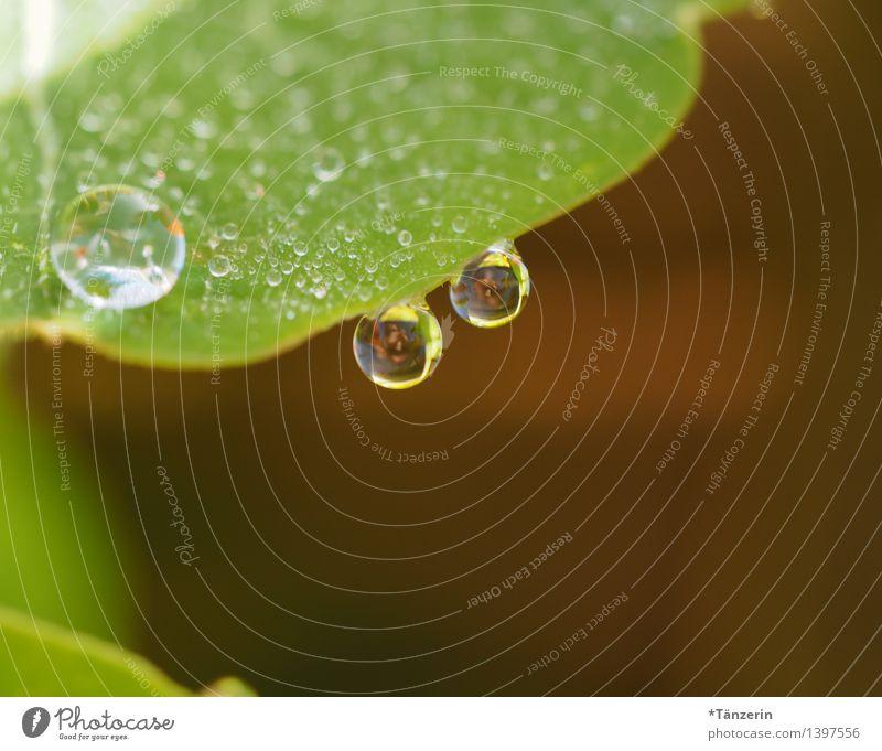 Tropfen V Umwelt Natur Pflanze Urelemente Wassertropfen Sommer Herbst Regen Blume Blatt Garten ästhetisch frisch Gesundheit nass natürlich schön grün achtsam