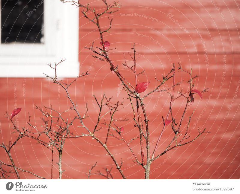 Rottöne Sträucher Garten Menschenleer Haus Hütte Fenster Freundlichkeit positiv rot Holzhaus Farbfoto mehrfarbig Außenaufnahme Nahaufnahme Tag