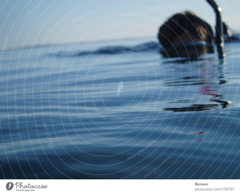 Der Weisse Hai Wasser Meer blau Sommer Wellen tauchen Ostsee Rügen Schnorcheln Hiddensee