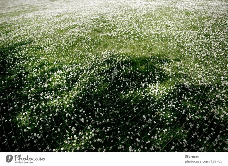 12 mm Sommer Wiese Landschaft Park Feld Macht Niveau Klee
