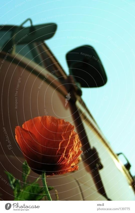 rot auf rot Pflanze Blume Blüte Mohn Röte Wachstum Dinge Fahrzeug Führerhaus Natur alt Blühend Außenaufnahme