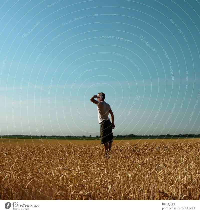 wir ernten was wir sehen Mensch Mann Pflanze gelb Gras Erde Arbeit & Erwerbstätigkeit Feld gold Lebensmittel Wachstum Ernährung Landwirtschaft Getreide trocken