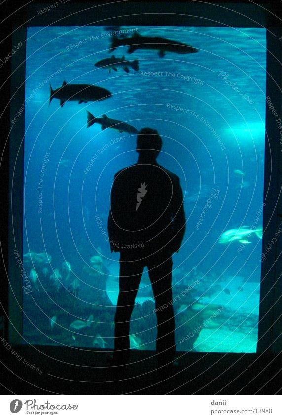 Der Alex Aquarium Mann maskulin dunkel Fisch Wasser blau