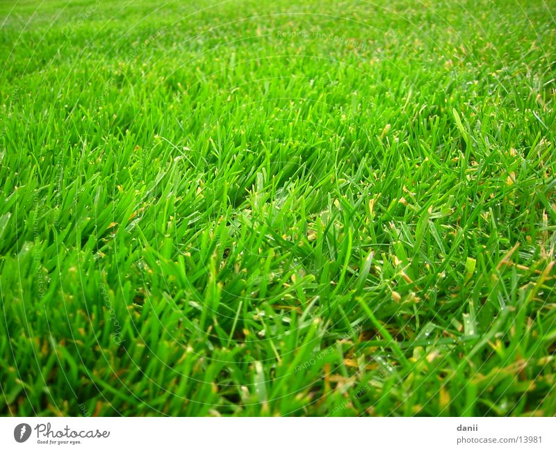 Rasen grün Wiese nass