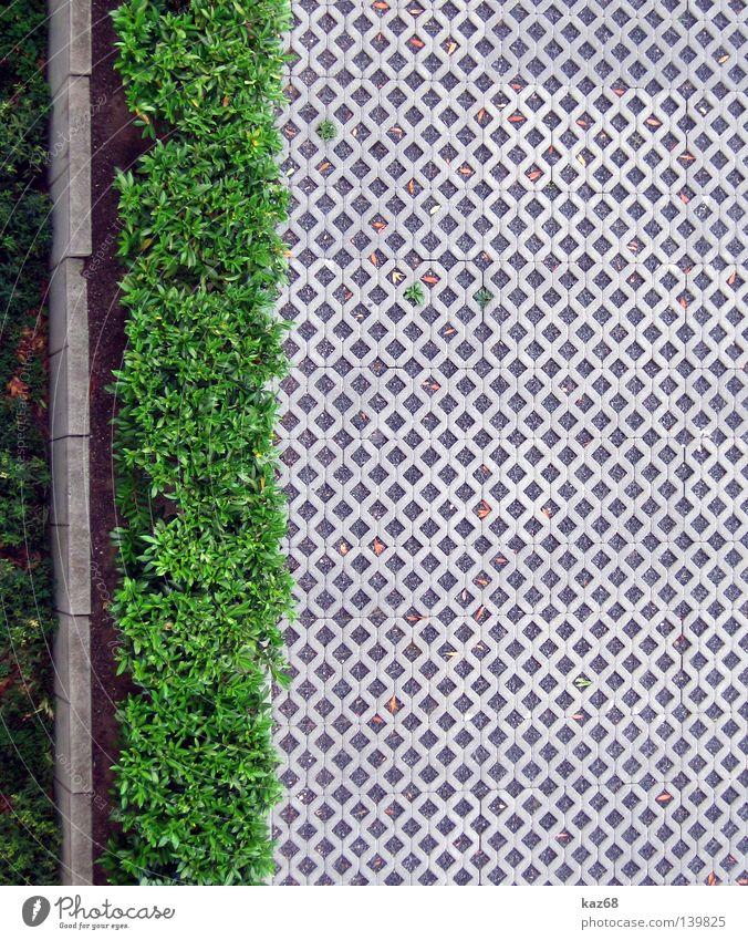 Ab durch die Hecke Sommer Frühling Licht Physik Winter Stoff Streifen Parkplatz Gras grün Ferien & Urlaub & Reisen Balkon Wohnung Haus weiß Mauer Asphalt