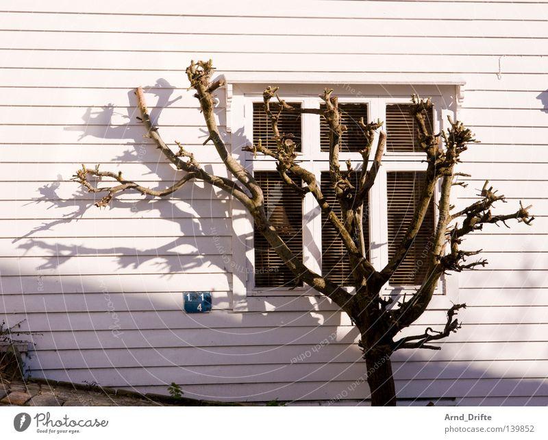 Schattenparker Norwegen Baum Bergen Fenster Holz Holzhaus Küste Sonne Sonnenuntergang steil Straße weiß Zweige u. Äste Geäst Sommer Ast