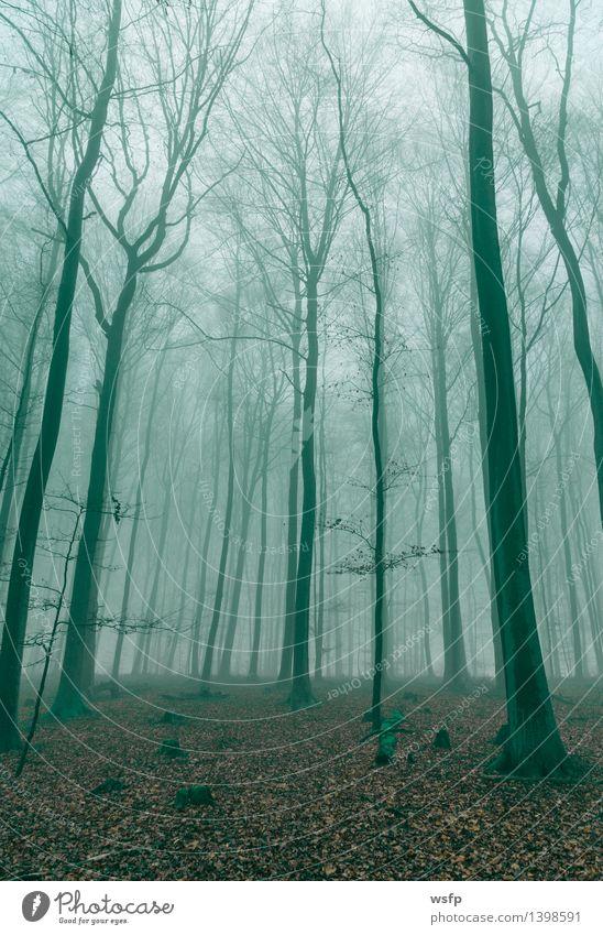 Fantasy Wald im Nebel in Grün Frühling Herbst Baum Blatt träumen grün Surrealismus dunkelgrün Zauber fantasie Märchenwald Zauberwald mystisch verfärbt