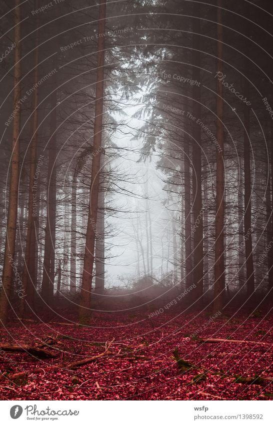 Dunkler Wald im nebel mit rotem Laub Frühling Herbst Nebel Baum Blatt träumen Surrealismus red Zauber fantasie Märchenwald Zauberwald mystisch verfärbt
