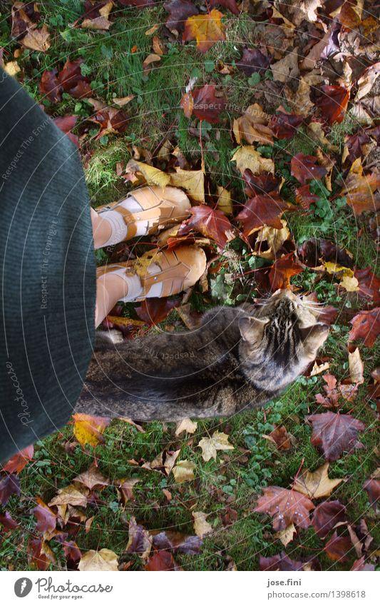 Blickrichtung Herbst feminin Mädchen Junge Frau Jugendliche Beine Fuß Natur Gras Blatt Garten Rock Schuhe Holzschuhe Tier Haustier Katze gelb grün rot Glück