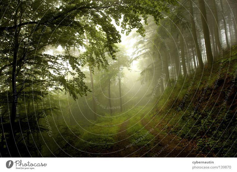 Waldweg Baum Nebel Nieselregen grün Wege & Pfade Wetter Natur Jagd