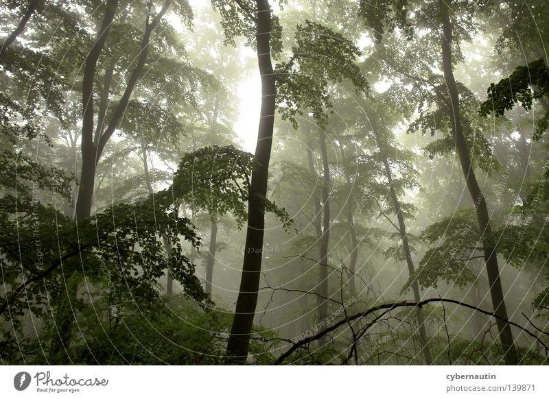 Zauberwald Baum grün Wald Nebel Wetter Ast Jagd Unterholz Nieselregen
